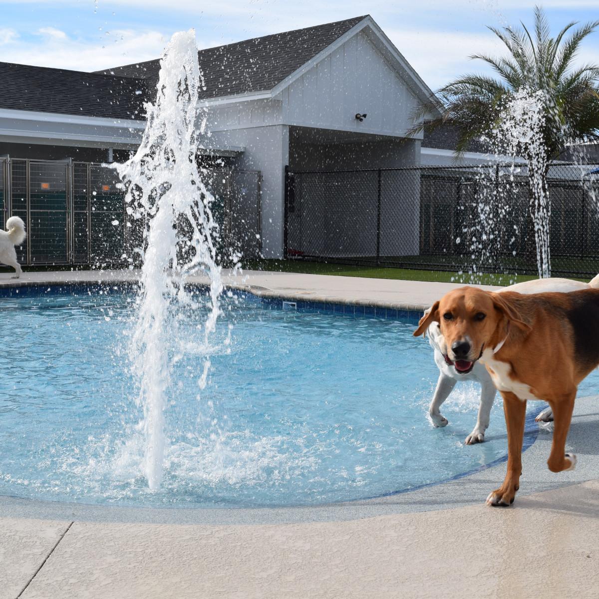 dog swimming pool pet paradise