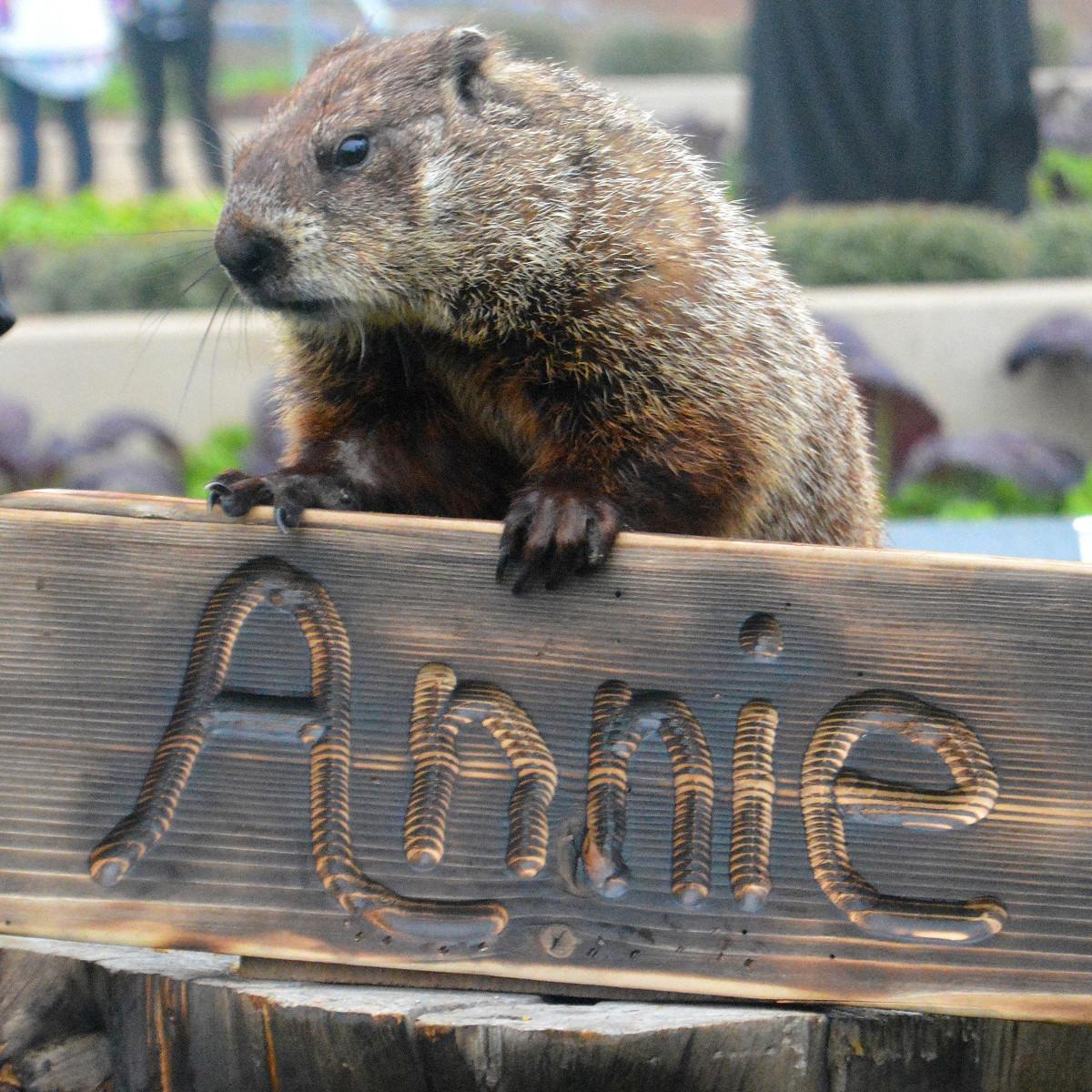 Arboretum Annie