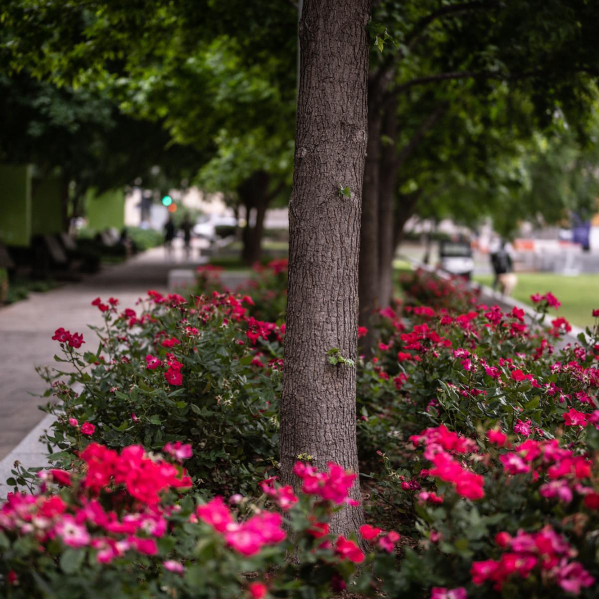 Main Street Garden