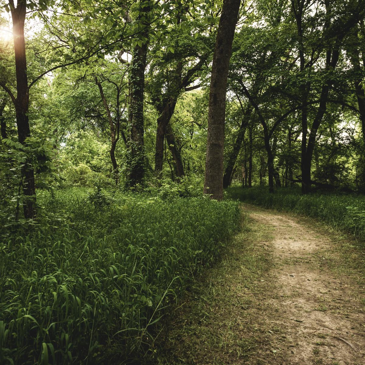 Trinity Falls walking trail