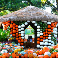 Dallas Arboretum and Botanical Garden presents Autumn at the Arboretum