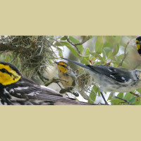Science talk with Dr. Hayley Gillespie // Endangered Species of Austin
