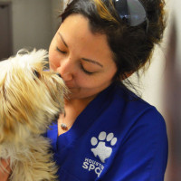 Houston SPCA