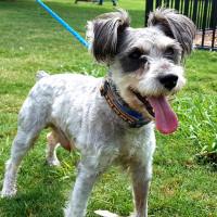 Houston, Pethouse Pet of the Week, June 2017, Arthur the dog 2
