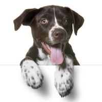 Bark and Drive SPCA Pet Adoption Day
