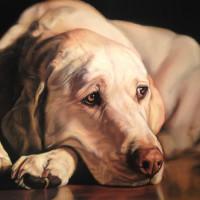 Ted M's dog Jacxson