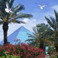 News_Galveston_Moody Gardens_Pyramid