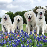 Keep Austin PYR'D Day in the Park