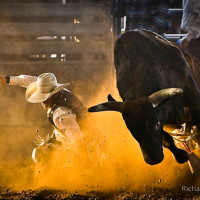 Saturday Night Rodeo