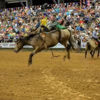 Pasadena Livestock Show & Rodeo