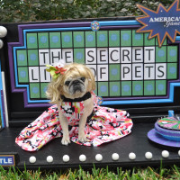 16th Annual Great PUGkinFest