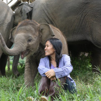 <i>Love & Bananas: An Elephant Story</i>