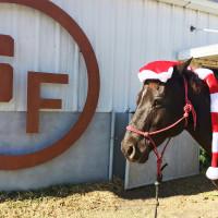 Trail Ride with Santa