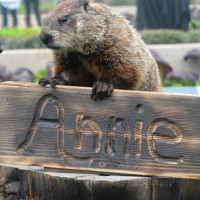 Groundhog Day Celebration