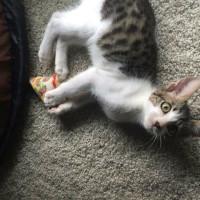 Kitten Mazie's Mission