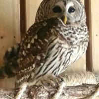 Owls of Texas