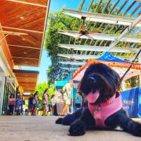 National Puppy Day Celebration