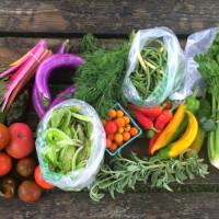 Vinder Austin veggies