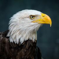 Houston Zoo Wetlands
