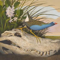 Seeing in Detail: Scott and Stuart Gentling's Birds of Texas
