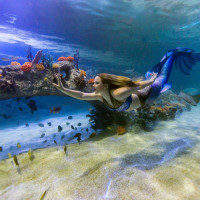 Sea Life Grapevine Aquarium presents Magical Mermaid Show