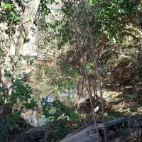 Memorial Park 101: Hogg Bird Sanctuary