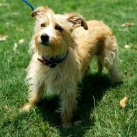 Pet of the week - Romeo terrier