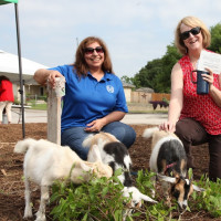 Goats will be part of the Garcia Street Urban Farm.