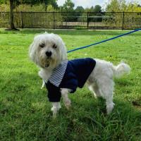Pet of the week - Lucky Maltipoo