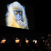 National Geographic: Symphony for Our World  2018 Worldwide Tour