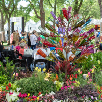 Cottonwood Art Festival in Richardson