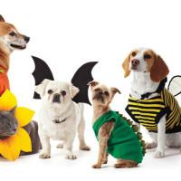 Pet Parade & Pet Costume Contest