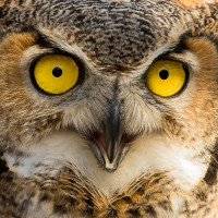 Houston Audubon Owl Prowl