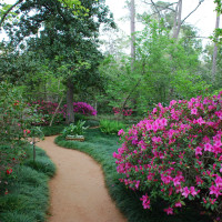 River Oaks Garden Club presents Azalea Trail