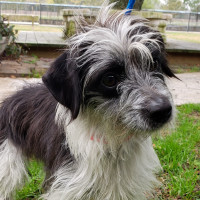 Pet of the week - Duchess terrier mix