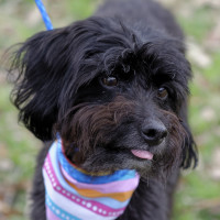 Pet of the week - Chico Maltese mix