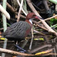 <i>Mad Birding – Birding the Four Corners of Madagascar</i>