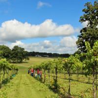 West Sandy Creek Winery vineyard