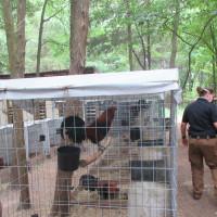 SPCA cockfighting southeast dallas