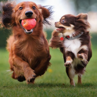 Two dogs running in a park