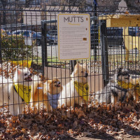 Dogs at MUTTS Canine Cantina