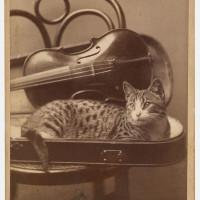 A. M.  Nikodem, Chicago, IL, [Cat], 1880s