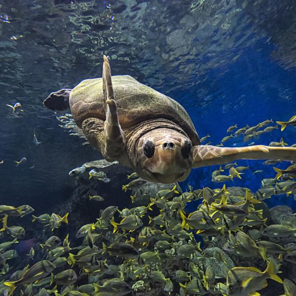SeaWorld San Antonio shells out 3 splashy new attractions this summer