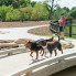 Ken Hoffman: Ken Hoffman warns of the dangers looming in Houston dog parks