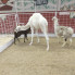 Teresa Gubbins: Problematic petting zoo at State Fair of Texas has another animal issue