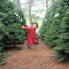 Maile Elton : 10 places to buy Christmas trees in Austin, from downtown lots to cut-your-own farms