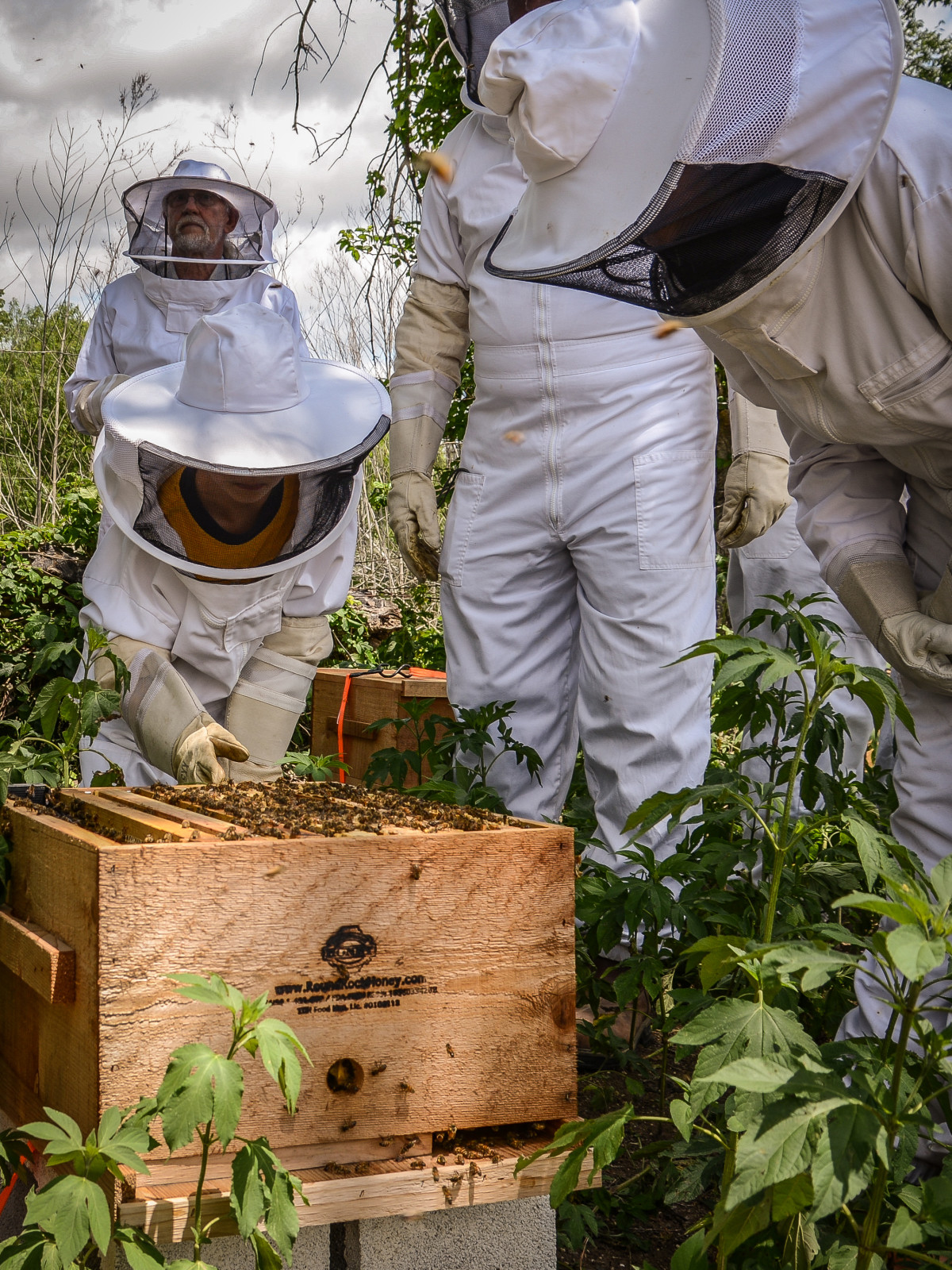 Round Rock Honey Beekeeping Class