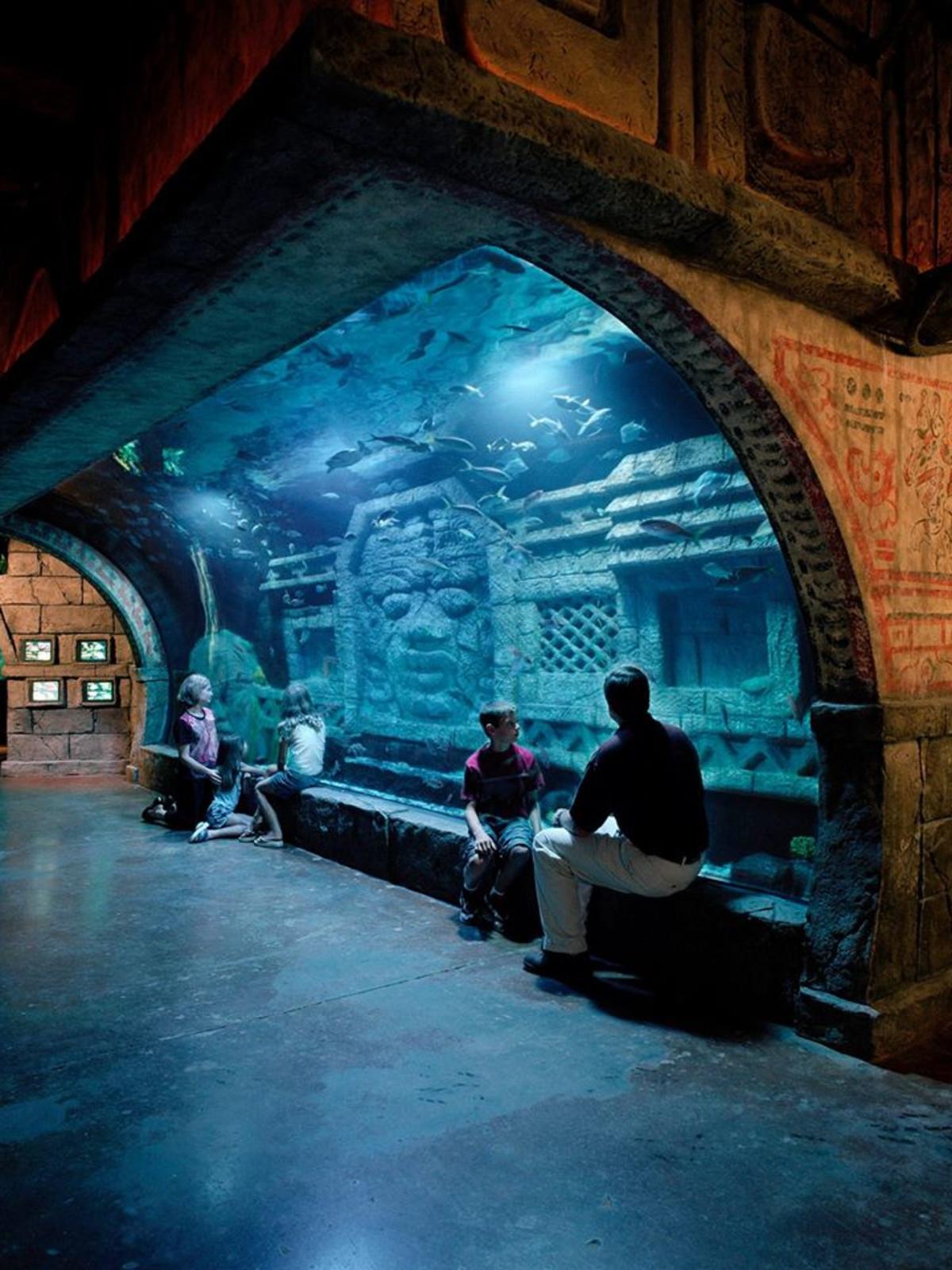 Shark Weekend at the Downtown Aquarium