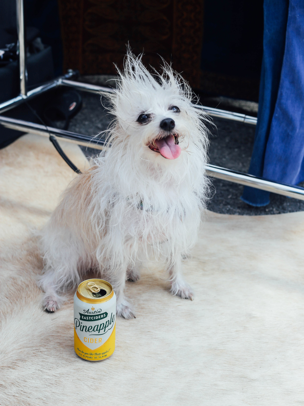 Dog with can of Austin Eastciders