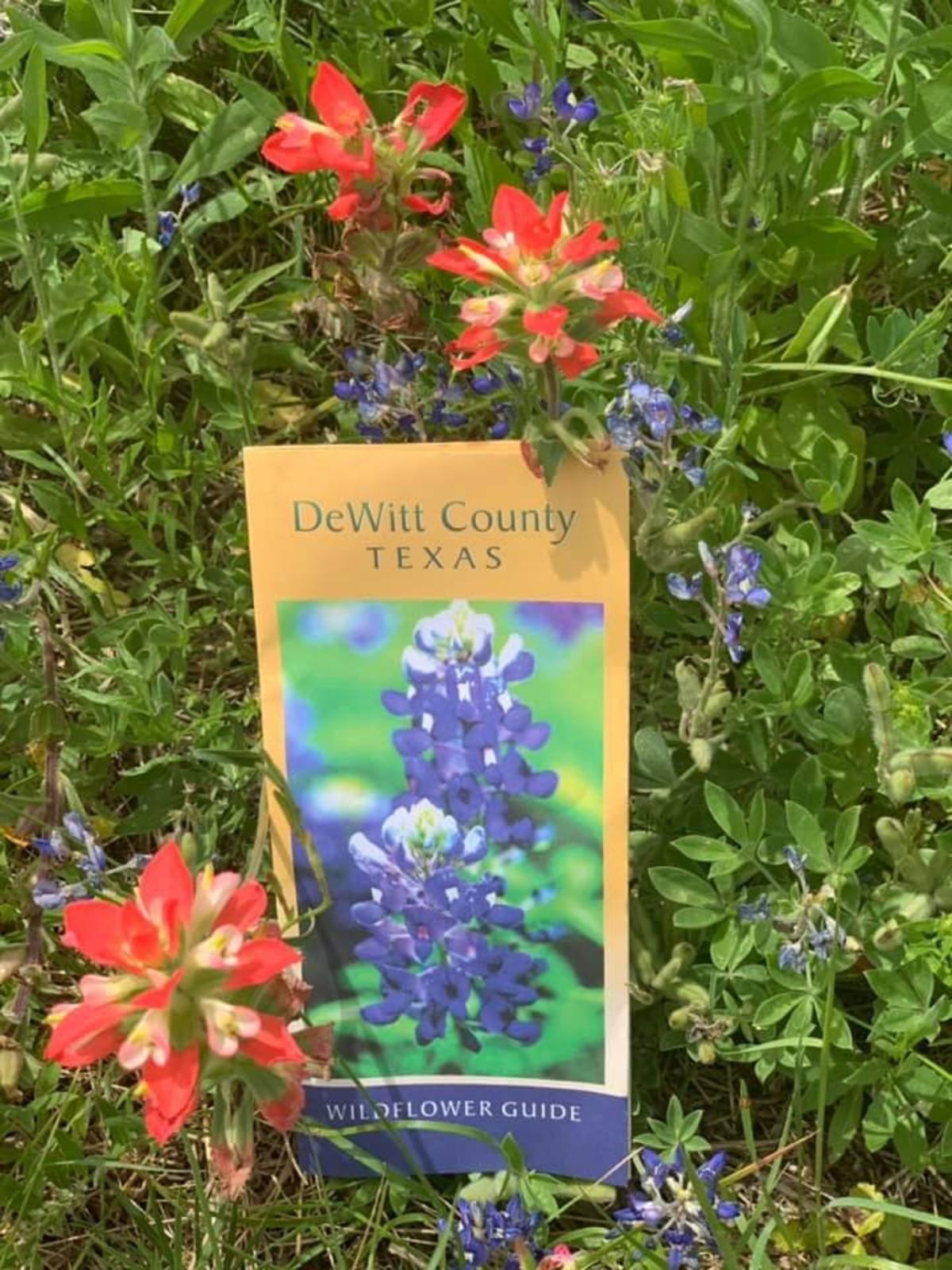 DeWitt County bluebonnets